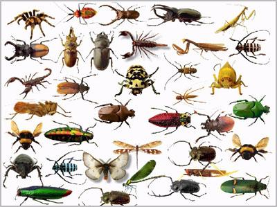 صوره رؤية الحشرات في المنام