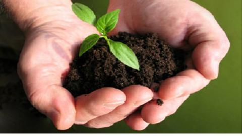 صوره ما هو جمع كلمة زرع