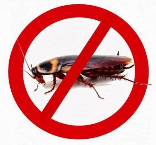 http://i2.wp.com/tafserdream.com/wp-content/uploads/2014/11/1379762699_548454364_4-Al-raqi-pest-control-rak-Repair.jpg