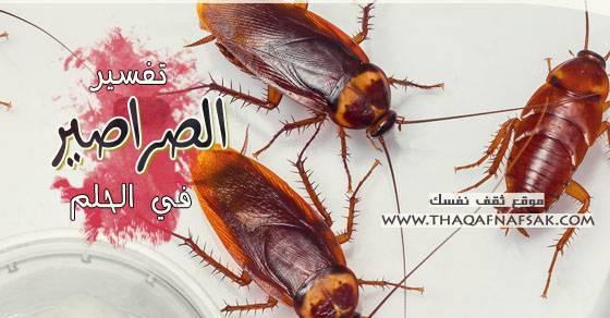 صوره تفسير حلم الصراصير فى المنام
