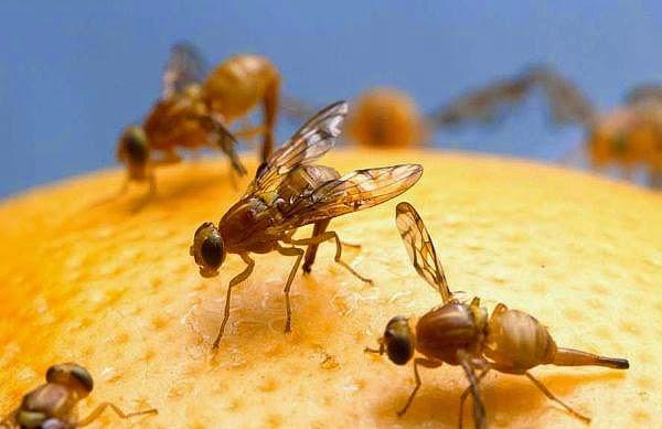 صوره طرق مبتكرة للتخلص من مشكلة الذباب للابد