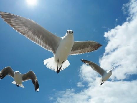 صوره حلمت اني اطير بدون اجنحة فما التفسير !
