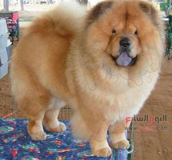 بالصور اندر انواع الكلاب بالصور 20160708 794