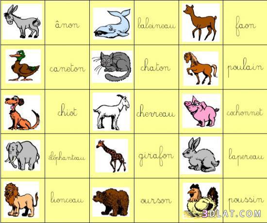 صوره اسماء الحيوانات بالفرنسية للاطفال