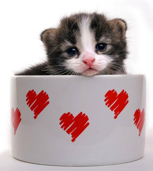 صوره صور قطط جميلة كيوت