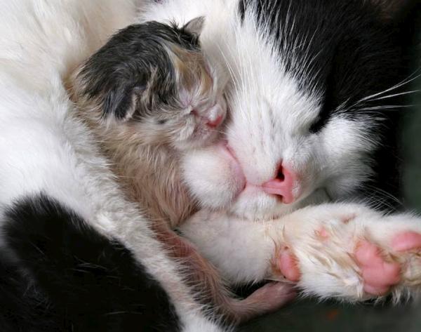 بالصور صور قطط جميلة كيوت 20160708 967
