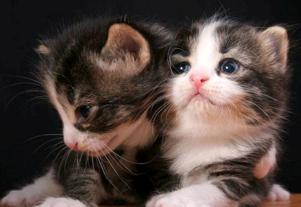 بالصور صور قطط جميلة كيوت 20160708 968