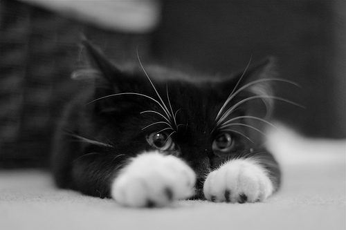 بالصور صور قطط جميلة كيوت 20160708 969
