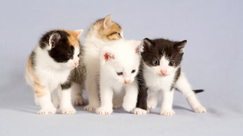 بالصور صور قطط جميلة كيوت 20160708 973