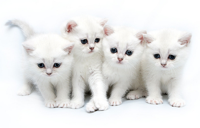 بالصور صور قطط جميلة كيوت 20160708 976