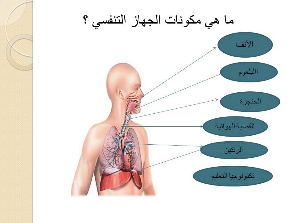 صوره تعريف الجهاز التنفسي للانسان