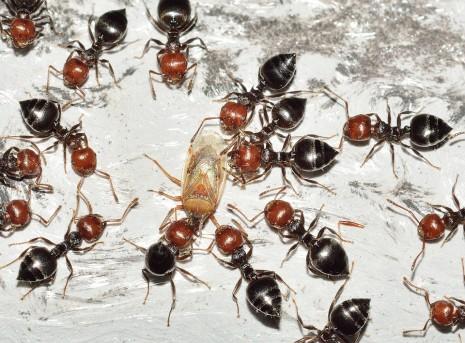 صوره تفسير حلم النمل للحامل