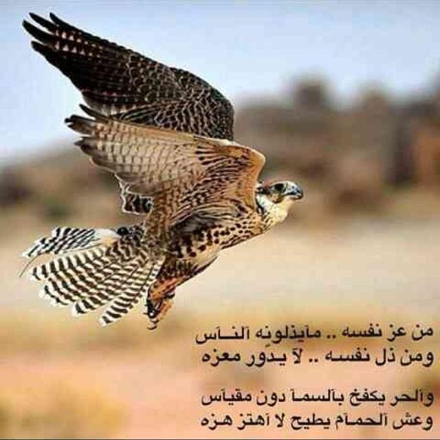 بالصور شعر عن العز والفخر 20160709 1898