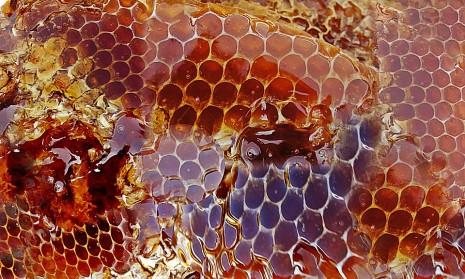 صوره اكل العسل في المنام ابن سيرين