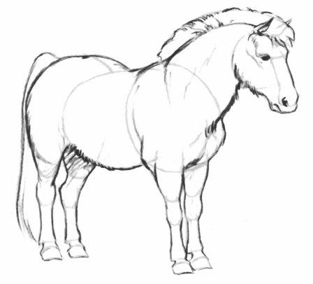 بالصور كيفية رسوم حصان للاطفال 20160709 754