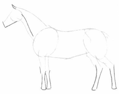 بالصور كيفية رسوم حصان للاطفال 20160709 763