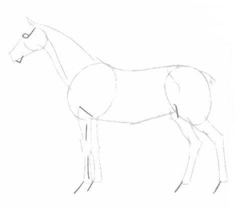 بالصور كيفية رسوم حصان للاطفال 20160709 766