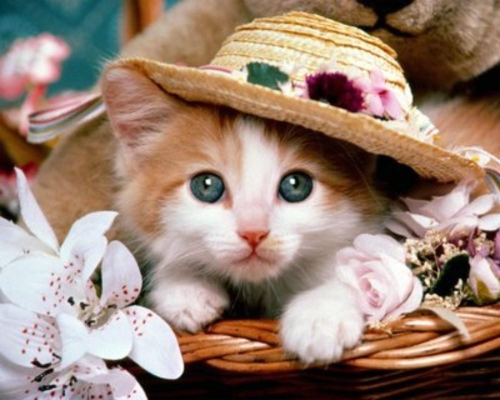 صوره صور بسس قطط جميلة