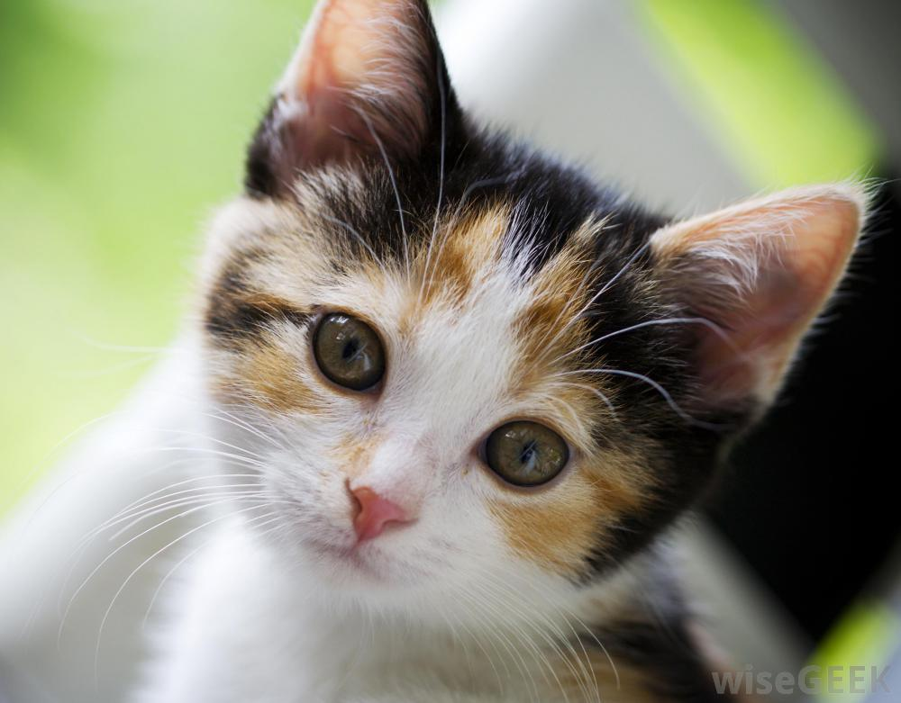 صور قطط حلوة  ,<br /><br /> صور قطط قمرات 2019 ,<br /><br /> قطة جميلة 2019 Photos Cats 2019_1412123027_616.