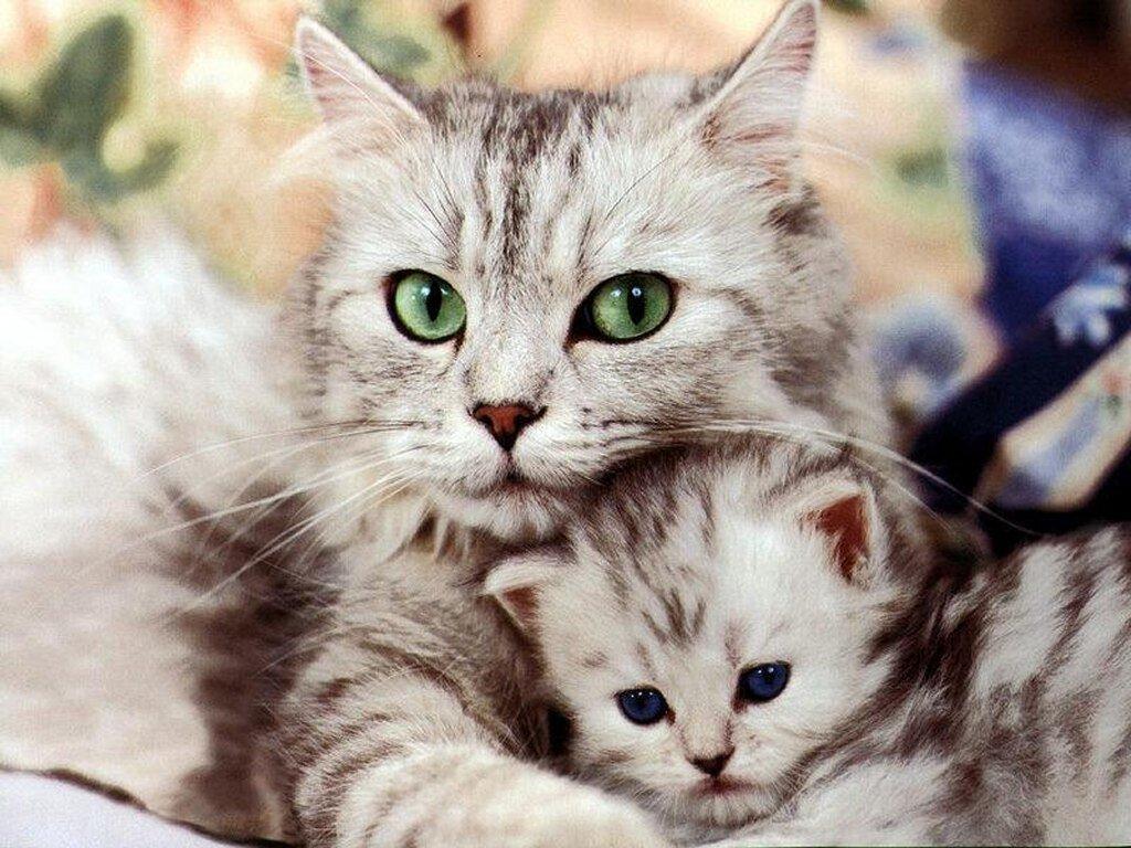 صور قطط حلوة  ,<br /><br /> صور قطط قمرات 2019 ,<br /><br /> قطة جميلة 2019 Photos Cats 2019_1412123045_434.