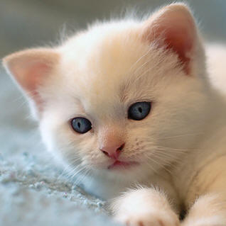 صور قطط حلوة  ,<br /><br /> صور قطط قمرات 2019 ,<br /><br /> قطة جميلة 2019 Photos Cats 2019_1412123046_740.