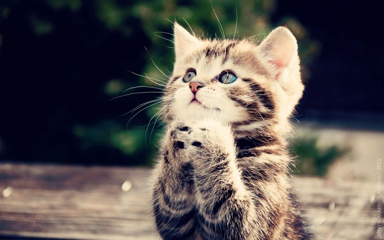 صور قطط حلوة  ,<br /><br /> صور قطط قمرات 2019 ,<br /><br /> قطة جميلة 2019 Photos Cats 2019_1412123036_861.