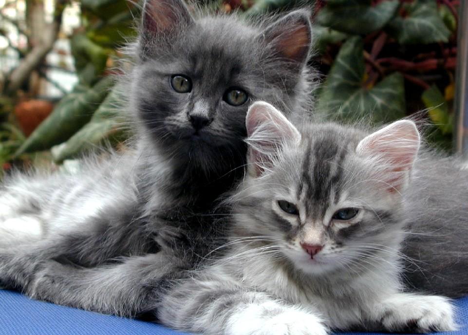 صور قطط حلوة  ,<br /><br /> صور قطط قمرات 2019 ,<br /><br /> قطة جميلة 2019 Photos Cats 2019_1412123043_699.