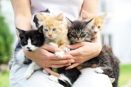 صور قطط حلوة  ,<br /><br /> صور قطط قمرات 2019 ,<br /><br /> قطة جميلة 2019 Photos Cats 2019_1412123048_815.