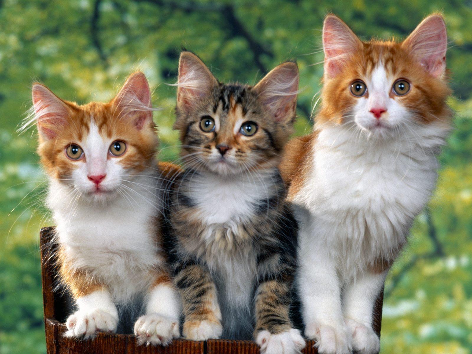 صور قطط حلوة  ,<br /><br /> صور قطط قمرات 2019 ,<br /><br /> قطة جميلة 2019 Photos Cats 2019_1412123033_254.