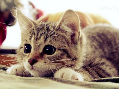صور قطط حلوة  ,<br /><br /> صور قطط قمرات 2019 ,<br /><br /> قطة جميلة 2019 Photos Cats 2019_1412123046_702.