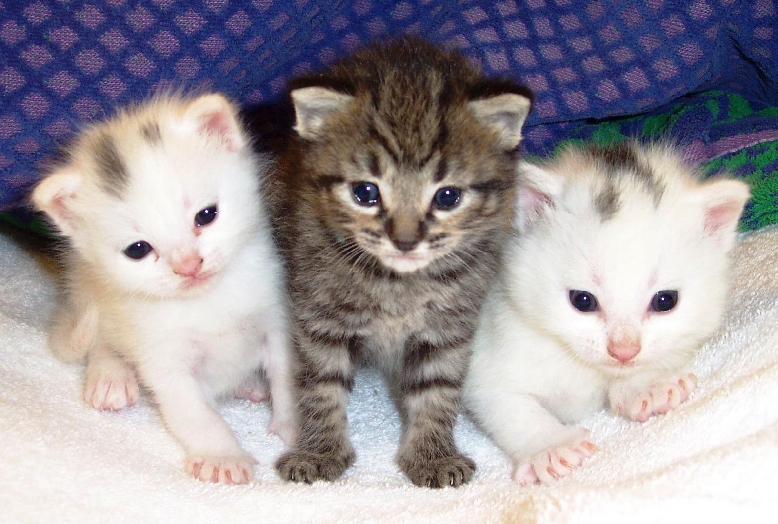صور قطط حلوة  ,<br /><br /> صور قطط قمرات 2019 ,<br /><br /> قطة جميلة 2019 Photos Cats 2019_1412123023_843.