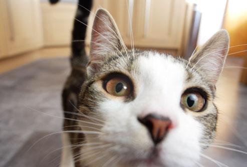 صور قطط حلوة  ,<br /><br /> صور قطط قمرات 2019 ,<br /><br /> قطة جميلة 2019 Photos Cats 2019_1412123033_872.