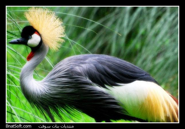 http://www.bnatsoft.com/pic/animals/animals_043.jpg