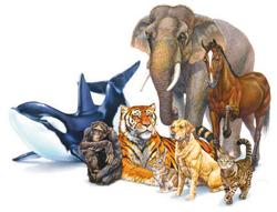 صورة كيف يوظف الانسان بعض الحيوانات في حياته