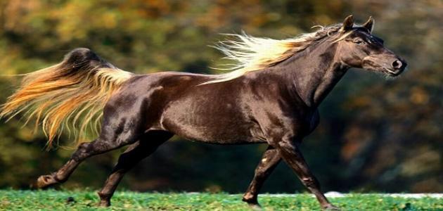 صوره ملف كامل حول اصوات الحصان