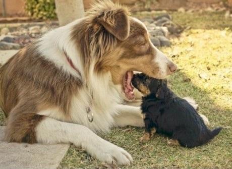بالصور عضة الكلب في المنام 20160710 965