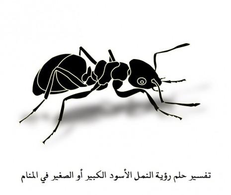 بالصور تفسير حلم النمل على الحائط 20160711 1165