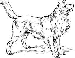 بالصور صور رسومات كلاب حلوة وبسيطة 20160711 1966