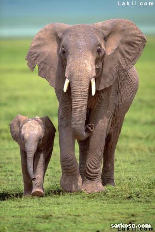 بالصور بحث حول الفيل بالفرنسية 20160711 410