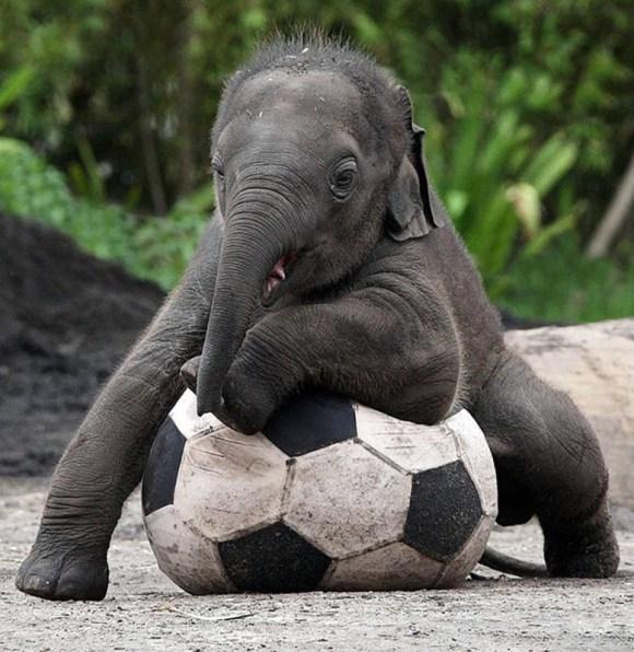 بالصور صور طريفة لصغار الحيوانات 20160711 612
