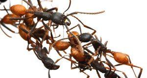 صوره بحث عن اسرار عالم النمل بالصور