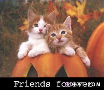 اجمل صور الصداقة 2017 صور صداقة 13598059784.jpg