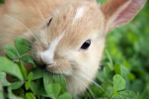 بالصور اجمل صور ارانب صغيرة وجميلة 20160712 154