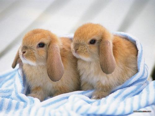 بالصور اجمل صور ارانب صغيرة وجميلة 20160712 156
