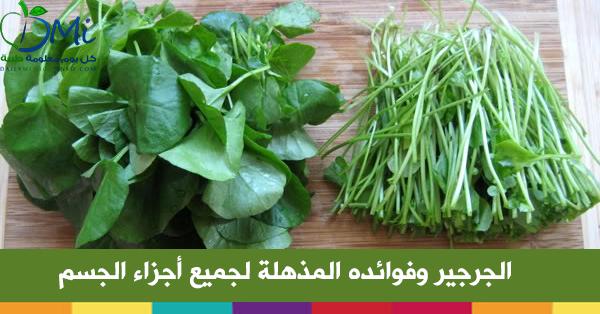 صورة ما هو الجرجير وما فوائده للجسم , فوائد لاتعرفها عن نبات الجرجير 20160712 165