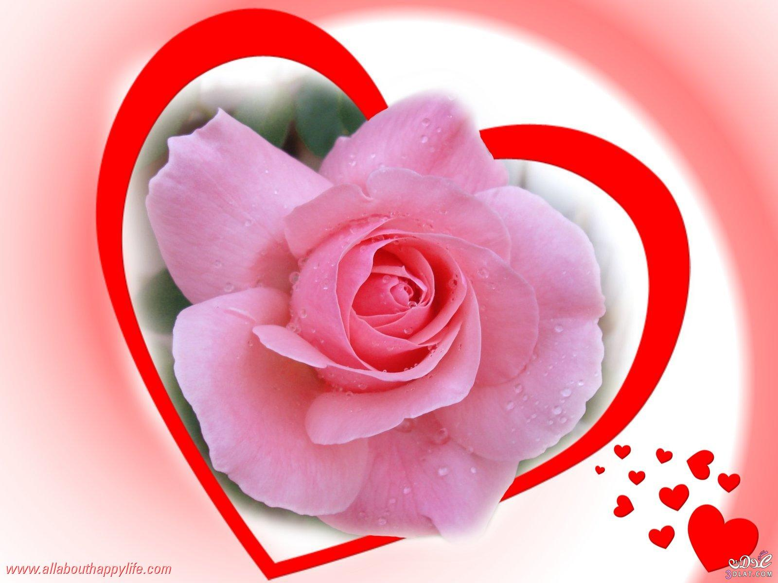 بالصور اجمل صور القلوب والورود 20160712 1805