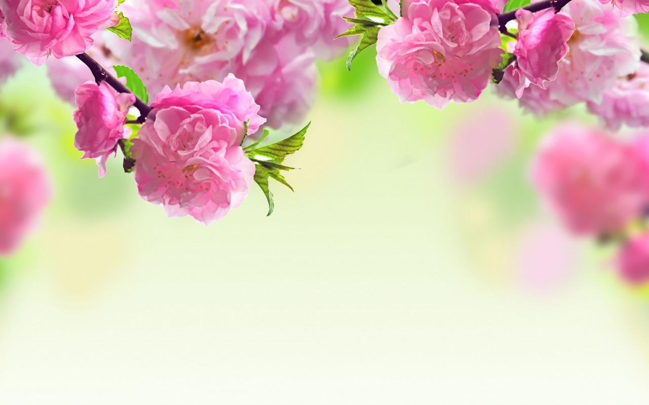 بالصور اكبر مجموعة من صور الورد الرائعة 20160712 1810