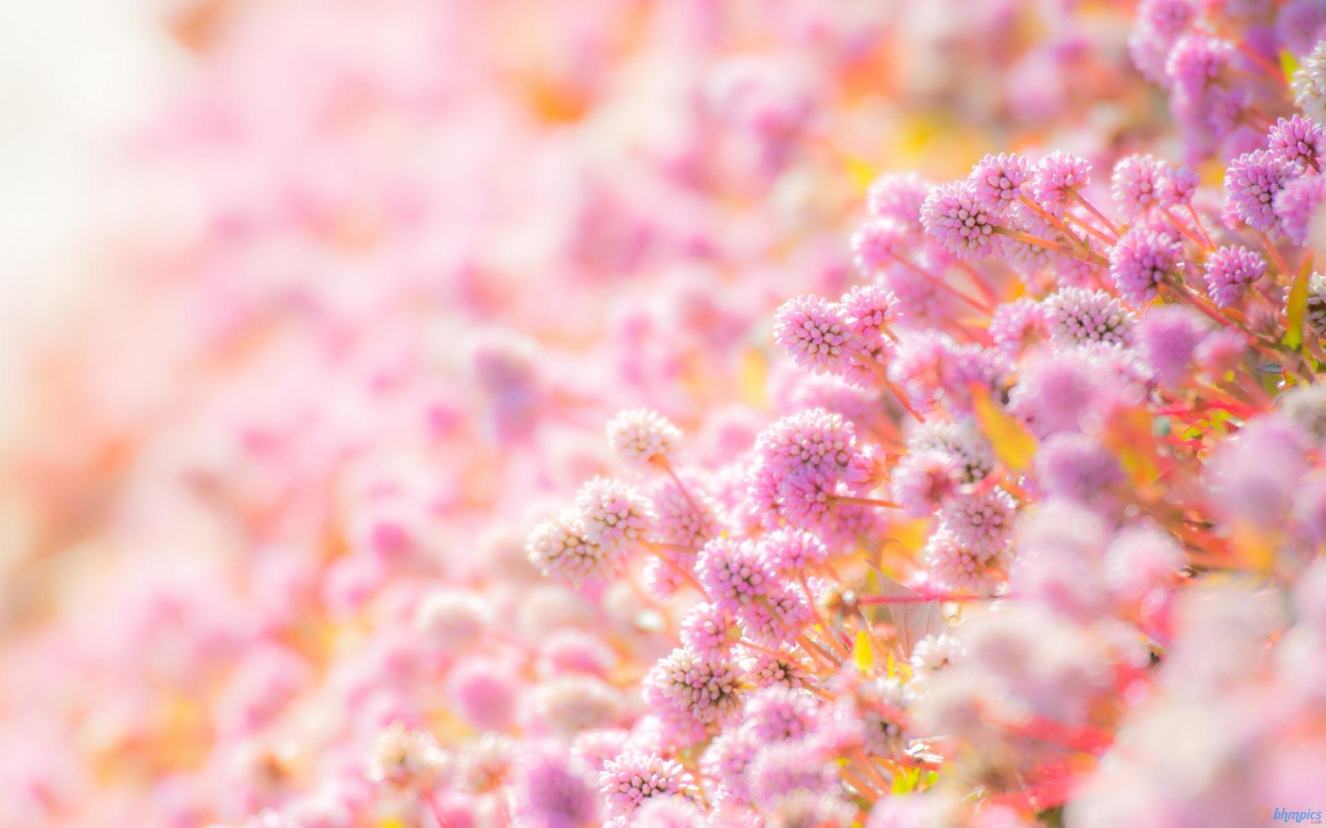 بالصور اكبر مجموعة من صور الورد الرائعة 20160712 1812