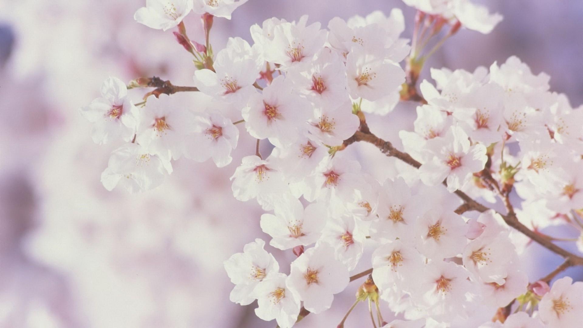 بالصور اكبر مجموعة من صور الورد الرائعة 20160712 1813