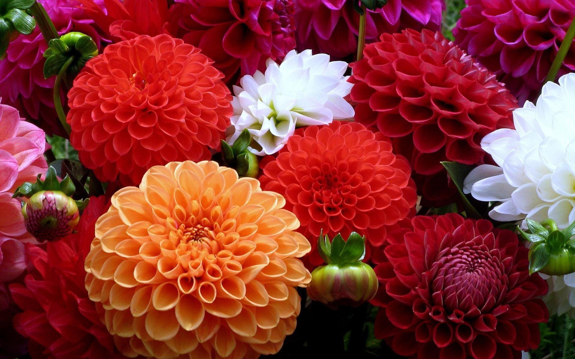 بالصور اكبر مجموعة من صور الورد الرائعة 20160712 1818